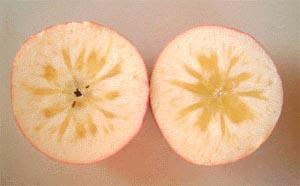 りんごの蜜の写真