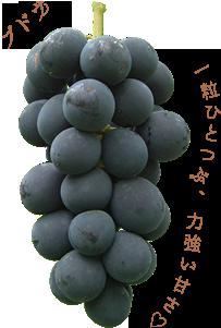 ブドウの画像