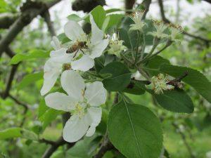ふじの花の写真
