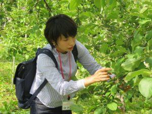 摘果作業体験の様子
