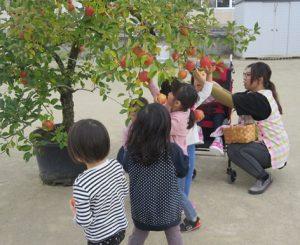 りんごの収穫の様子